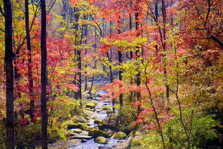 Национальный лесной заповедник гор Лафашань
